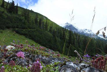 Гори влітку – Походи, трекінг і корівки