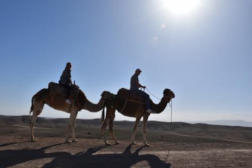 пустеля в марокоо марракеш верблюди